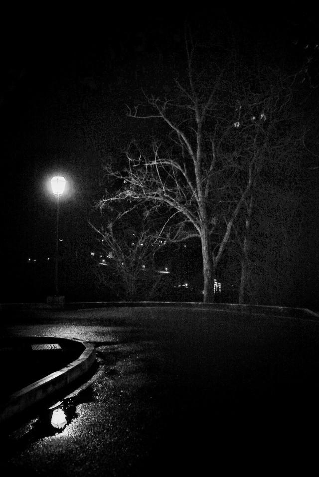 #tuscany #black & white #monochrome #blackandwhite #italy #tree