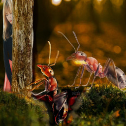 freetoedit ants giantanimals giantcreatures ircnaturalbeauty