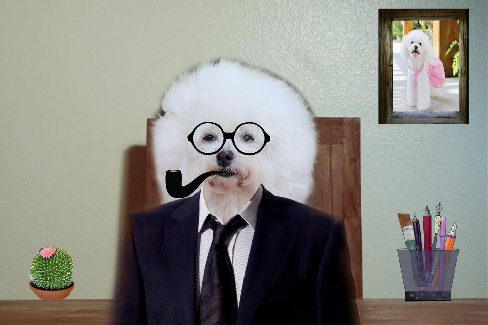 #freetoedit #remixed de @picsart #dog #class #office #seriously #fun #funny