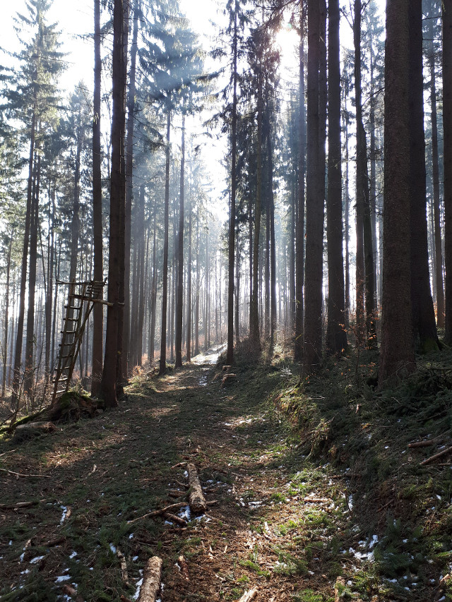 I love long silent walks in the forest   #freetoedit