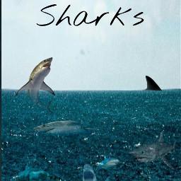 fearfactorchallenge sharks freetoedit