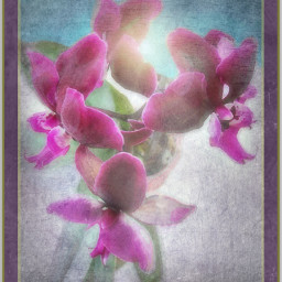 freetoedit art photography edited orchids