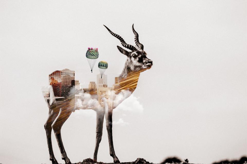 #freetoedit #deer #city #parachutes #doubleexposure #animal #clouds #cactus Op by @gabrielphotography