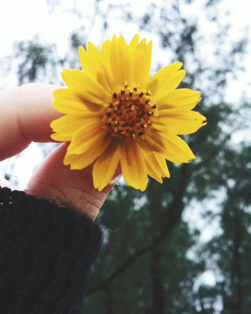 Flower Flore Photography Tumblr
