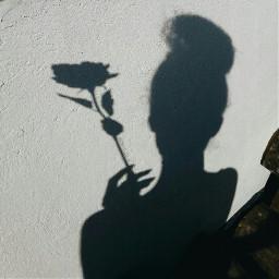 denitsapavlova denaya_p sun shadow rose freetoedit