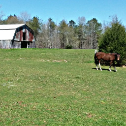 thesimplelife horselove grassfield field barn