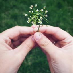 freetoedit hands grassflower grass remixme