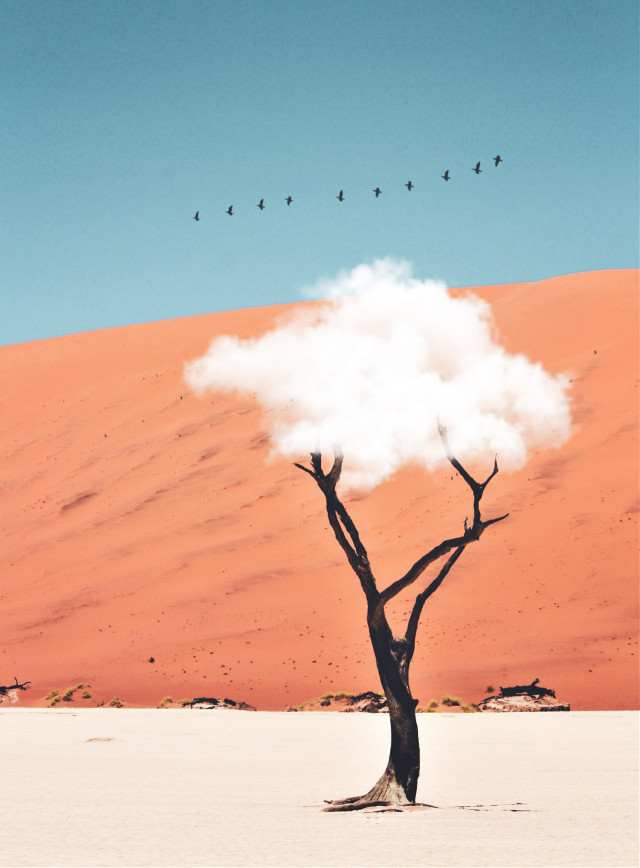 #freetoedit #madewithpicsart #nature #tree #clouds #birds @picsart