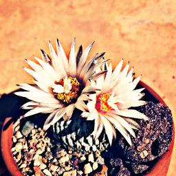 instaphoto travel naturalbeauty freetoedit pctinycactus