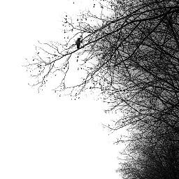 bird dead creppy cute tree