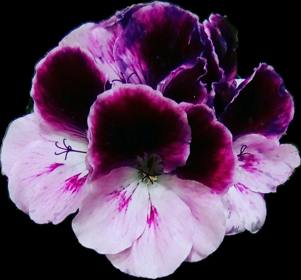 Flores Violet Violets Violetas Moradas Flowers Plantas