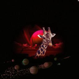 freetoedit ircgiraffe giraffe