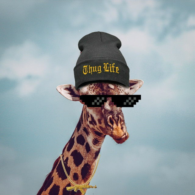 #freetoedit Posting this old gem I did up again lol. #giraffe #thug #thuglife #beanie #surrealism #picsart