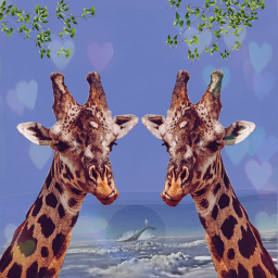 freetoedit jiraffe jirafa mar animales ircgiraffe