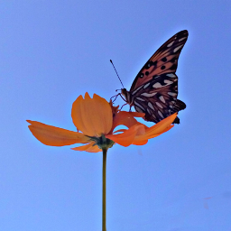photography borboleta flor dialindo god