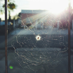 freetoedit teladearaña araña spider spiders