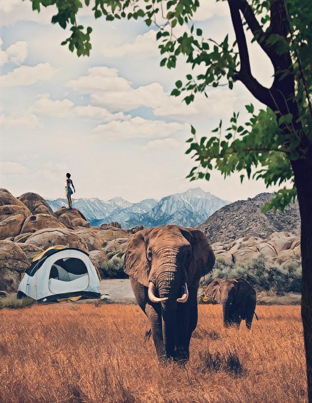 #freetoedit @pa #myedit #tent #ircelephants #elephants #sky #clouds #girl #people #tree #mountain #nature