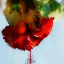 colorful flower photography art artoftheday