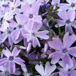 freetoedit remixit nature remix flowers spring springtime