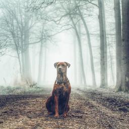 forest nature foggy foggymorning misty freetoedit