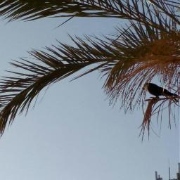 egyptbeauty crow freetoedit