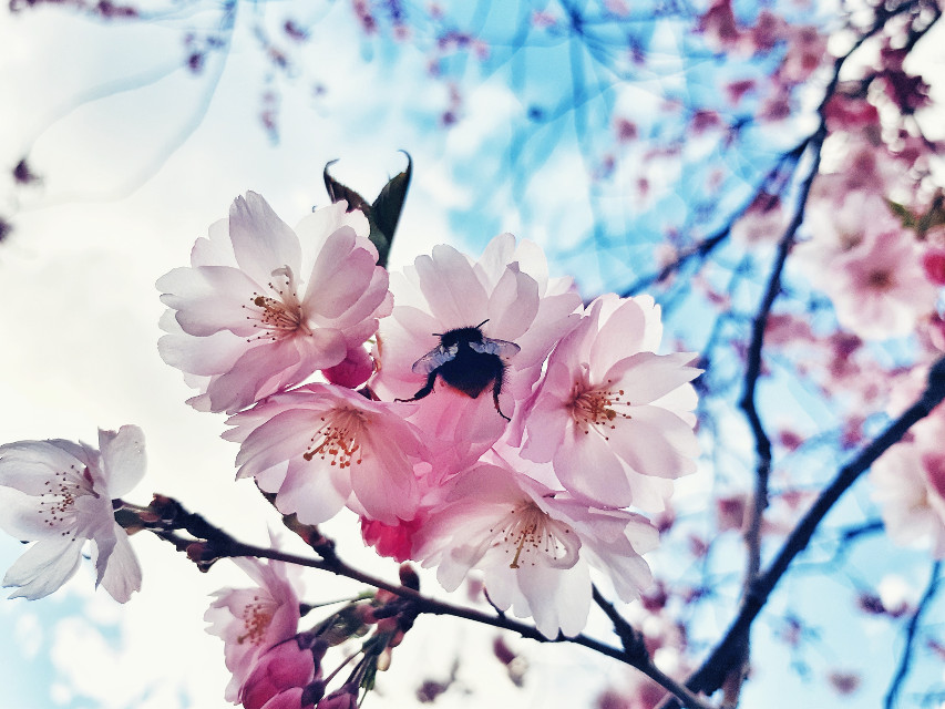 #freetoedit #nature #photography #flowers