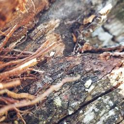 wood nature photography naturephotography