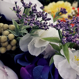 pcpurple purple