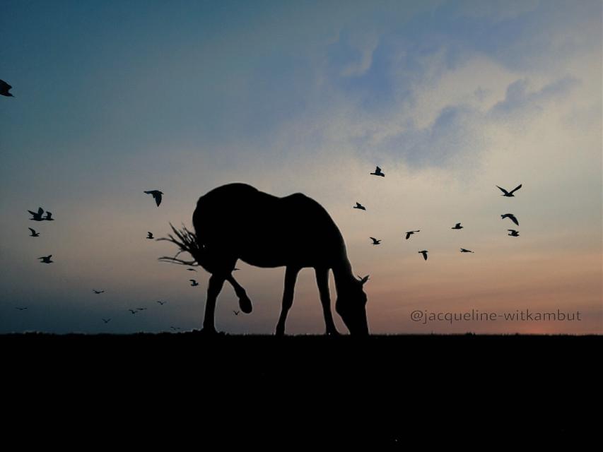 #freetoedit #sunset #horse #silhouette