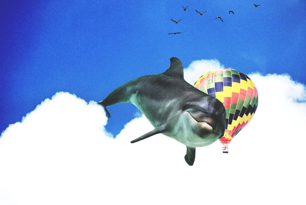 #freetoedit #dolphin