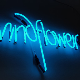 freetoedit kr 1975 art windflower pcthroughmylense pcshadesofblue