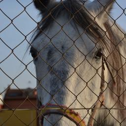pchorse horse