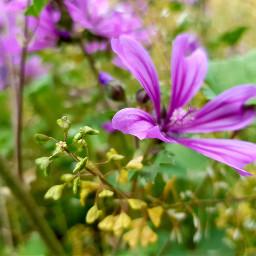 freetoedit flower spring springflowers