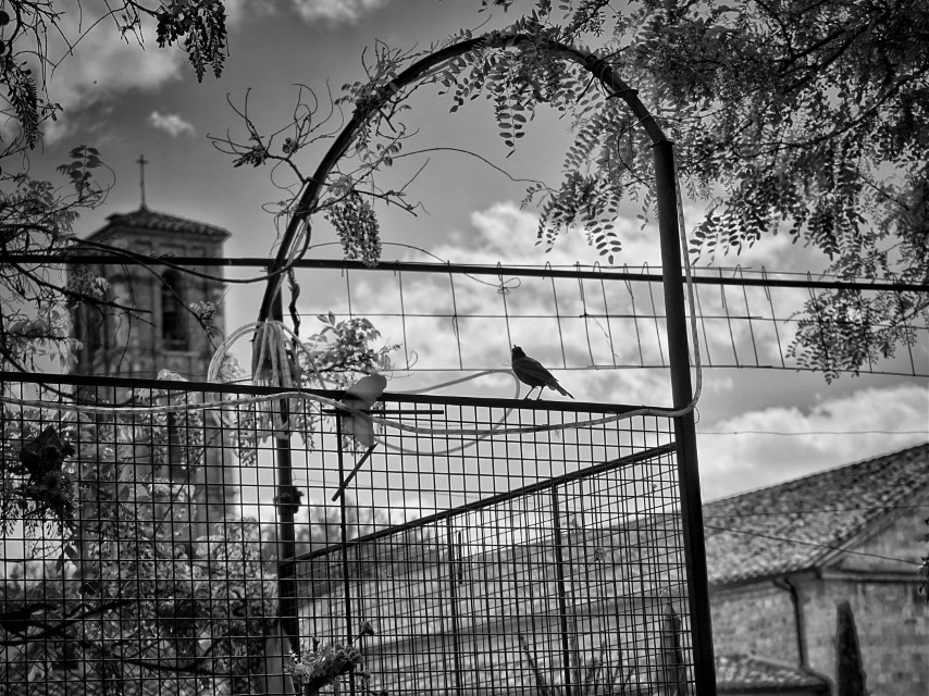 #freetoedit #blackandwhite #cityscape #tuscany #monochrome #italy