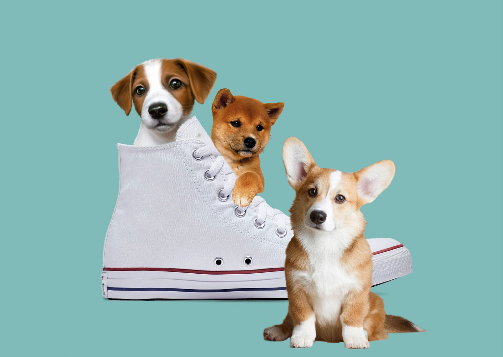 #freetoedit #puppies #dog #play #shoes #hide #freetoedit #freetoeditremix @freetoedit