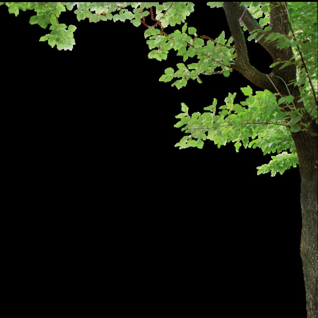Borders Around Trees: Ftestickers Tree Border