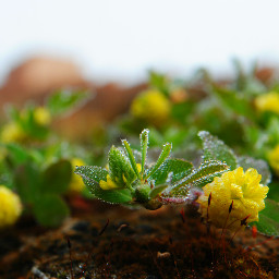 plant drops blossom garden fort morocco green yellow