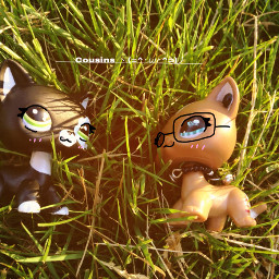 lps littlestpetshop meandmycousin freetoedit remixit
