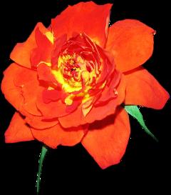 flores flowers freetoedit