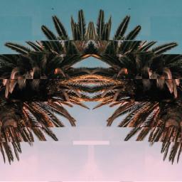 freetoedit ircpalmtree palmtree
