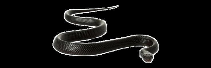 snake freetoedit