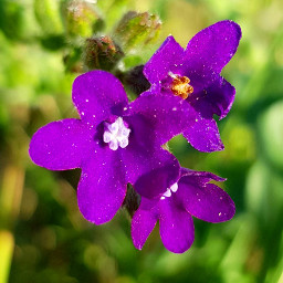 freetoedit flowers nature naturephotography grassflower