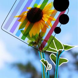 freetoedit sunflower dailyremix flower remixit