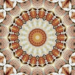 freetoedit seashells kaleidoscope design interesting