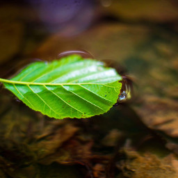 water leaf green inthewild nature