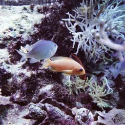 freetoedit fish coral aquarium myphotography
