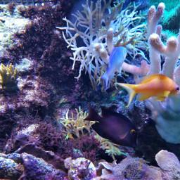 freetoedit fish aquarium coral life
