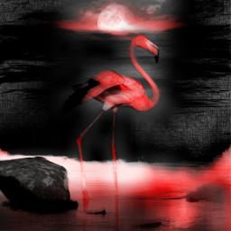 freetoedit ircflamingo flamingo