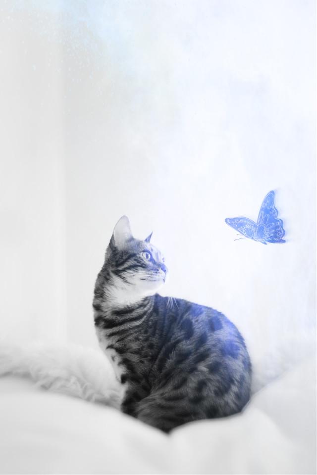 #freetoedit #butterfly #light #blackandwhite #irccat