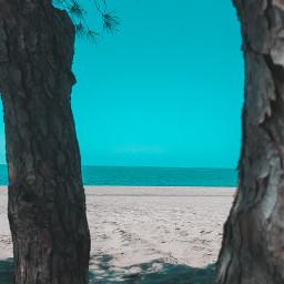 freetoedit beach sea trees sand pcbeaches